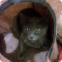 Adopt A Pet :: Grace - Whitestone, NY