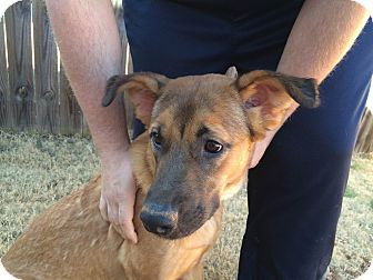 Shepherd (Unknown Type) Mix Dog for adoption in Homewood, Alabama - Molly