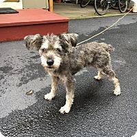 Adopt A Pet :: Annabelle - Chicago, IL