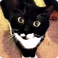 Adopt A Pet :: BOND - Burlington, NC