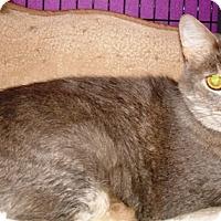 Adopt A Pet :: Stormy - Kalamazoo, MI