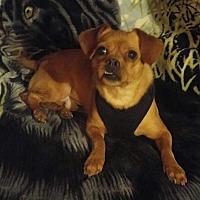 Adopt A Pet :: Joker - Wilmington, DE