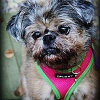 Adopt A Pet :: BONNIE in Houston, Texas - Austin, TX