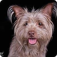 Adopt A Pet :: Kory - Lodi, CA