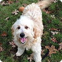 Adopt A Pet :: R.I.-NEWTON - W. Warwick, RI