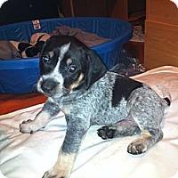 Adopt A Pet :: Jackson - Katy, TX