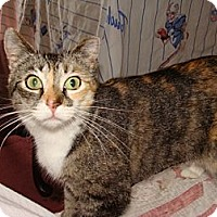 Adopt A Pet :: Heidi - Spotsylvania, VA