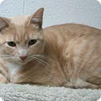 Adopt A Pet :: Yonkers - Colorado Springs, CO