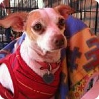 Adopt A Pet :: Bella - North Hollywood, CA
