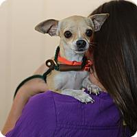 Adopt A Pet :: Buttercup - Mission Viejo, CA
