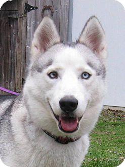 Siberian Husky Mix Dog for adoption in Clay, Alabama - Zoee