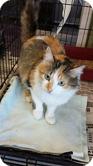 Calico Cat for adoption in Sauk Rapids, Minnesota - Page