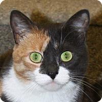 Adopt A Pet :: Gypsy - North Branford, CT