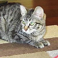 Adopt A Pet :: TaterTot - Orange, CA
