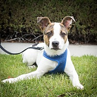 Adopt A Pet :: Arlie - Redwood City, CA