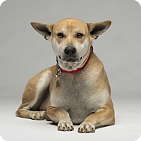 Adopt A Pet :: Skippy - Los Angeles, CA