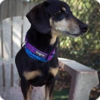 Adopt A Pet :: Wrangler - Lakeland, FL