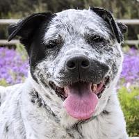 Adopt A Pet :: Gypsy - El Cajon, CA
