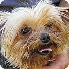 Adopt A Pet :: Zeus
