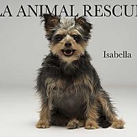 Adopt A Pet :: Isabella - Los Angeles, CA