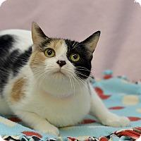 Adopt A Pet :: Rebecca - Medina, OH