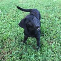 Adopt A Pet :: Janet - Walpole, MA