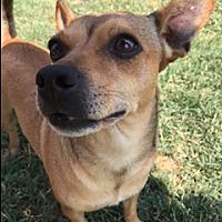 Adopt A Pet :: SATARI - Elk Grove, CA