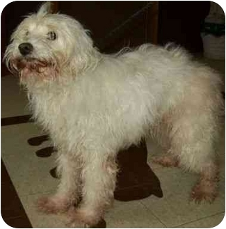 Terrier (Unknown Type, Small) Mix Dog for adoption in North Judson, Indiana - Sammie
