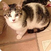 Adopt A Pet :: Kylie - St. Louis, MO