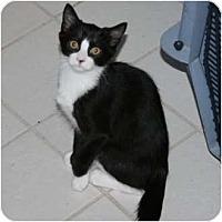 Adopt A Pet :: Skittles - Brodheadsville, PA