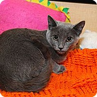 Adopt A Pet :: Silvia - Farmingdale, NY