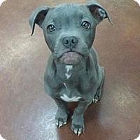 Adopt A Pet :: Grayson - Clarksburg, MD