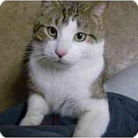 Adopt A Pet :: Tommy Boy - Jenkintown, PA