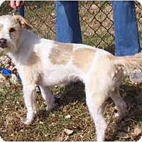 Adopt A Pet :: MAZIE - Phoenix, AZ