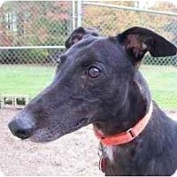 Adopt A Pet :: Boston (Kid's Boston) - Chagrin Falls, OH