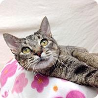 Adopt A Pet :: Rosalie - Foothill Ranch, CA
