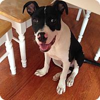 Adopt A Pet :: Sherlock - San Diego, CA