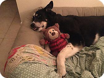 Border Collie Mix Dog for adoption in Tempe, Arizona - Pepper