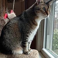 Adopt A Pet :: Lucy - Stone Mountain, GA