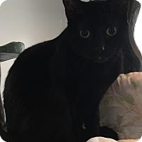 Adopt A Pet :: Frack - Lafayette, NJ