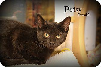 Domestic Shorthair Kitten for adoption in Glen Mills, Pennsylvania - Patsy