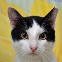 Adopt A Pet :: Max - Englewood, FL