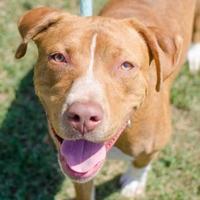 Adopt A Pet :: SJ - Greenwood, SC