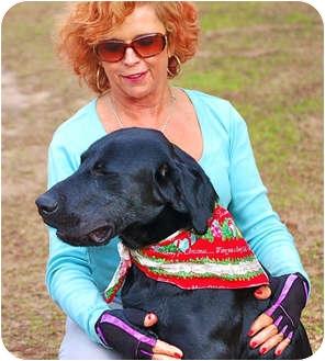 Labrador Retriever Mix Dog for adoption in Preston, Connecticut - Boozer