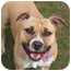 Photo 1 - American Staffordshire Terrier Mix Dog for adoption in Islip, New York - Daisy