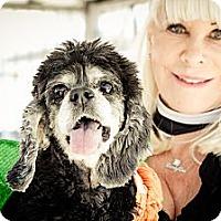 Adopt A Pet :: Timka - Acton, CA