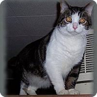 Adopt A Pet :: Sergeant - Brookville, IN