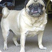 Adopt A Pet :: Coco Bean - Eagle, ID