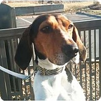 Adopt A Pet :: Amber - Douglas, MA