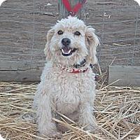 Adopt A Pet :: DUNCAN - Stockton, CA